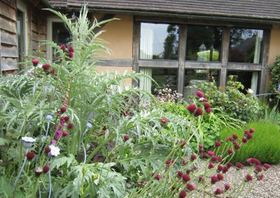 Cirsium and cardoons