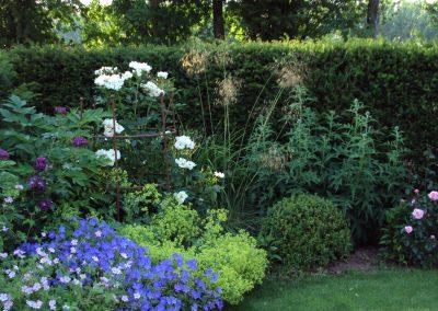 Roses, box and perennials