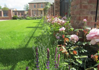 Roses, salvia and lavender