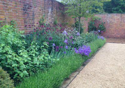 perennials and lavender